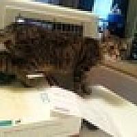 Adopt A Pet :: Punky Brewster - Tampa, FL