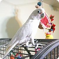 Adopt A Pet :: Paco - Wantage, NJ