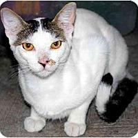 Adopt A Pet :: Tom FE2-7768 - Thibodaux, LA