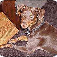 Adopt A Pet :: Choco - Nashville, TN