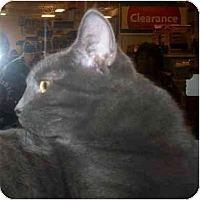 Adopt A Pet :: Arianna - Richmond, VA