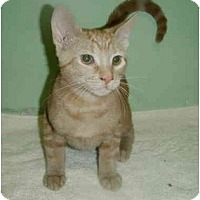 Adopt A Pet :: Bruiser - New Egypt, NJ