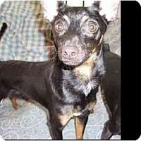 Adopt A Pet :: Greig - Phoenix, AZ