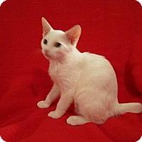 Adopt A Pet :: Drew - Richmond, VA