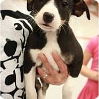 Adopt A Pet :: Luther - Arlington, TX