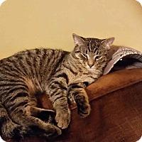 Adopt A Pet :: George - Ortonville, MI