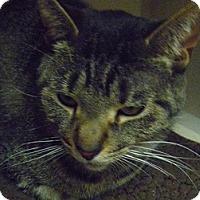 Adopt A Pet :: Jordan - Hamburg, NY