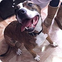 Adopt A Pet :: Venus - Medina, OH