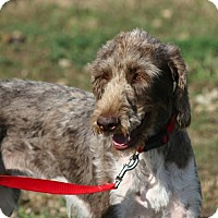 Adopt A Pet :: Dempsey - Evergreen, CO
