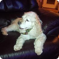 Adopt A Pet :: Mikey - Alpharetta, GA