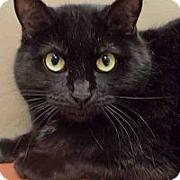 Adopt A Pet :: Kristi - Plainfield, IL