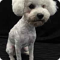 Adopt A Pet :: Candi - Encino, CA