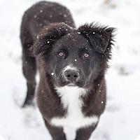 Adopt A Pet :: Dino - Millersville, MD