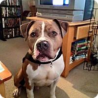 Adopt A Pet :: Kane - Acushnet, MA