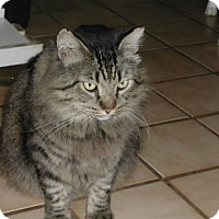 Adopt A Pet :: King - Bonita Springs, FL