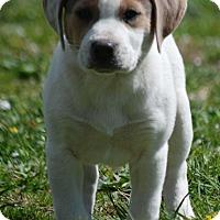 Adopt A Pet :: Sven - Providence, RI