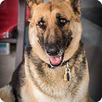 Adopt A Pet :: Glady - Phoenix, AZ