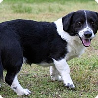 Adopt A Pet :: Noah - Little Compton, RI
