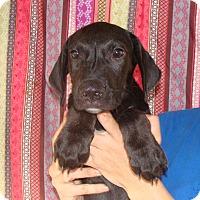 Adopt A Pet :: Geo - Oviedo, FL