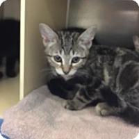 Adopt A Pet :: Anita - Titusville, FL