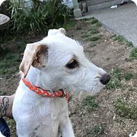 Adopt A Pet :: Mac - Tumwater, WA
