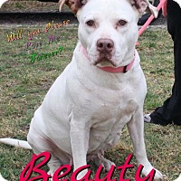 Adopt A Pet :: Beauty - Cheney, KS