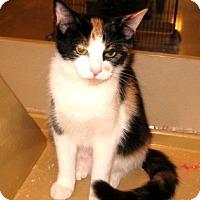 Adopt A Pet :: Macy - Colmar, PA