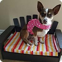 Adopt A Pet :: Abigail - San Diego, CA