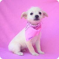 Adopt A Pet :: Lani - Burbank, CA