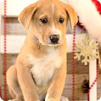 Adopt A Pet :: Toto - Waldorf, MD