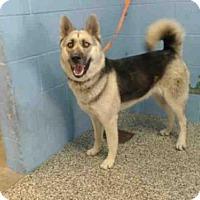 Adopt A Pet :: A500051 - San Bernardino, CA