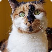 Adopt A Pet :: Patches - Marietta, GA