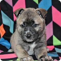 Adopt A Pet :: Tulsa D162112 - Edina, MN