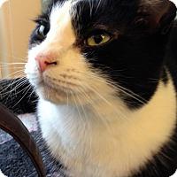 Adopt A Pet :: Caspien - Fairfax, VA