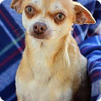 Adopt A Pet :: Walt - Midland, TX