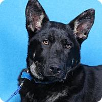 Adopt A Pet :: Dallas - Minneapolis, MN
