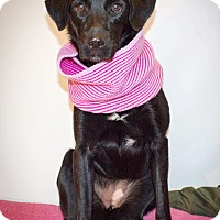 Labrador Retriever Mix Dog for adoption in Kingston, Tennessee - Mia