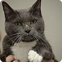 Adopt A Pet :: Fern - Reston, VA
