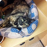 Adopt A Pet :: Marigold - West Dundee, IL