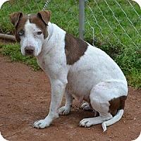 Adopt A Pet :: Meg - Athens, GA