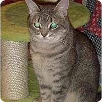 Adopt A Pet :: Leno - Chesapeake, VA