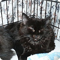 Adopt A Pet :: Ganesh - Colmar, PA