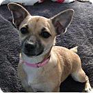 Adopt A Pet :: Christy