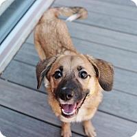 Adopt A Pet :: Mia - Smyrna, GA