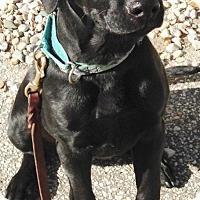 Adopt A Pet :: Serafin - Pleasant Plain, OH