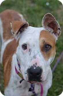 Pit Bull Terrier Mix Dog for adoption in Philadelphia, Pennsylvania - Winnie