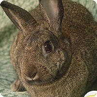 Adopt A Pet :: Easter - Santa Barbara, CA
