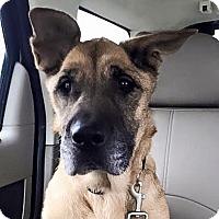 Adopt A Pet :: Quinn - Sacramento, CA