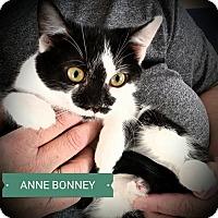 Adopt A Pet :: Anne Bonne - Fairborn, OH