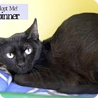 Adopt A Pet :: Spinner - West Des Moines, IA